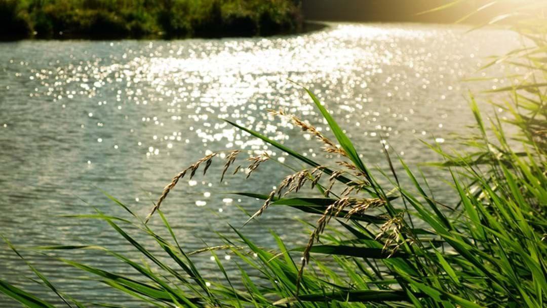 Article heading image for Mildura South Wetlands undergoes maintenance